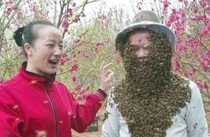 蜂疗抗癌疗法
